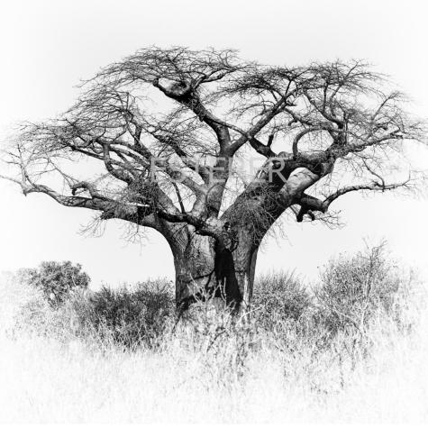 ESTERER AFRICAN DIARY