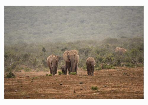 Rain In Africa
